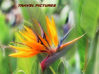 Макромир | Цветок