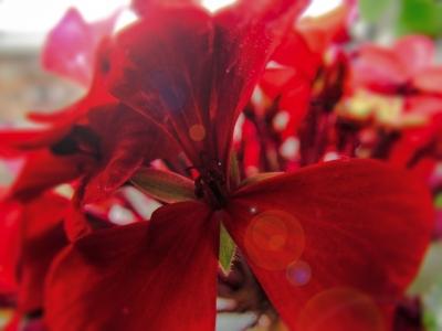 Удивительный мир растений | Красный цветок
