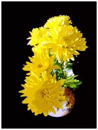 Натюрморт «Хризантемы»