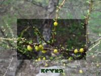 Макромир | Ветка