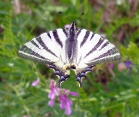 Макросъемка | Бабочка