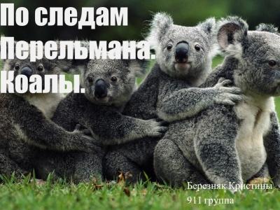 По следам Перельмана | Коалы