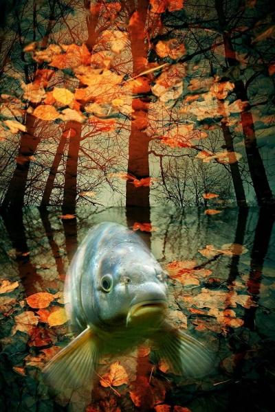 Мои увлечения | Рыбка