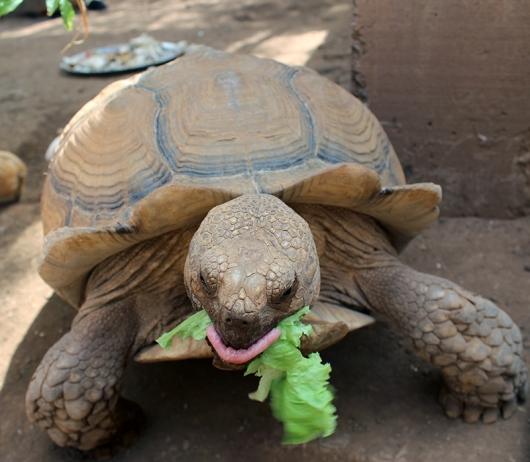 Мир животных | Черепаха