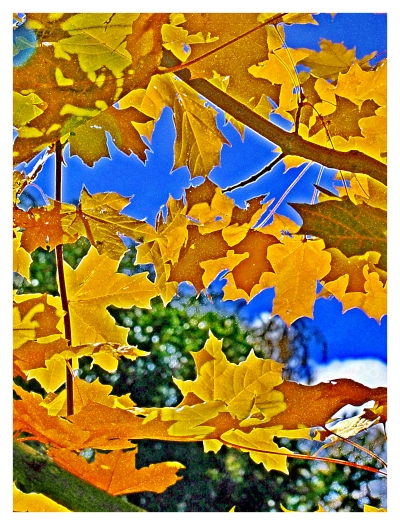 Природа родного края | Осень