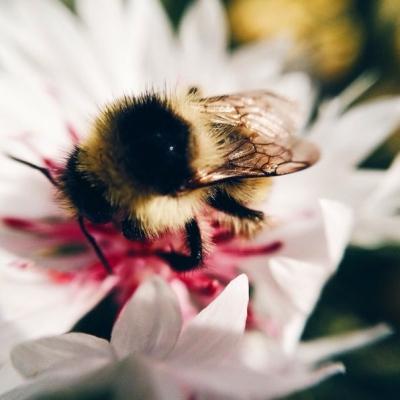 Макромир | Пчела