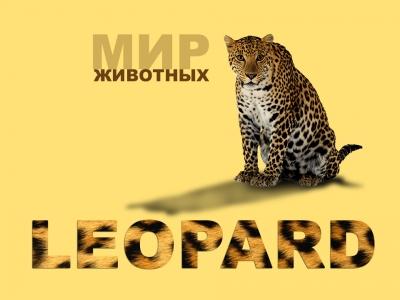Дизайн обложки книги | Мир животных