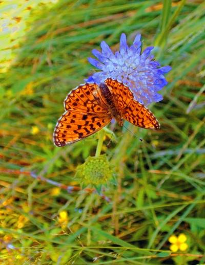 Макросъемка   Бабочка